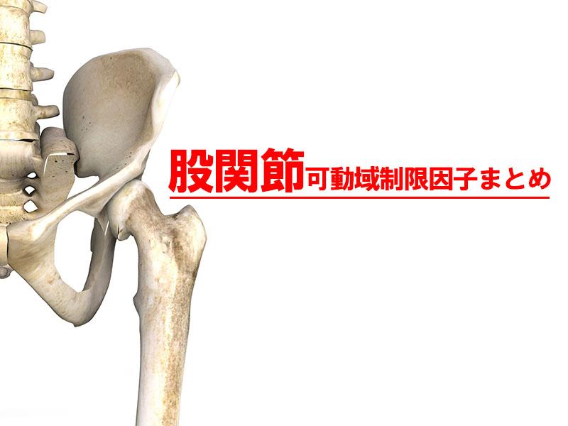 股関節可動域制限因子まとめ!臨床的評価と運動療法に対する考え方!